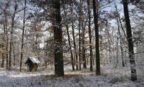 Zima v lese Hájek
