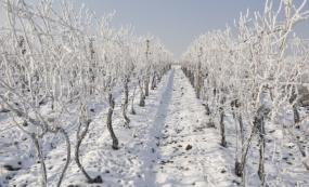 Zima ve vinici v okolí Vranovic